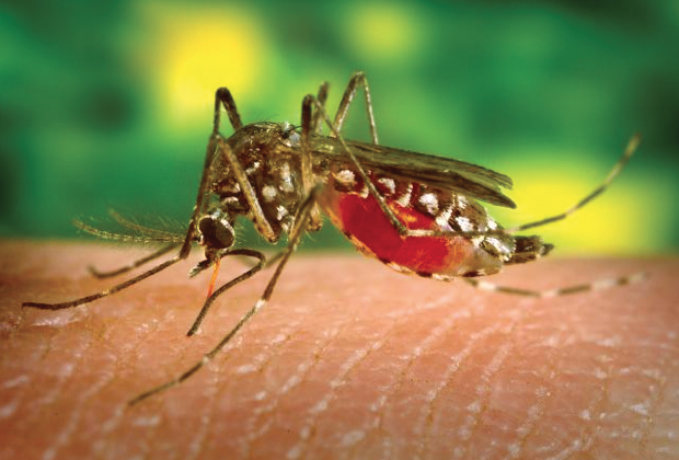 Attenti alla West Nile Disease